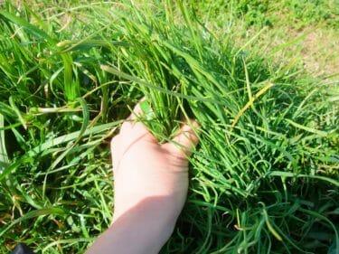 【鍼灸整体師が解説】草むしりで腰痛にならないための対策方法