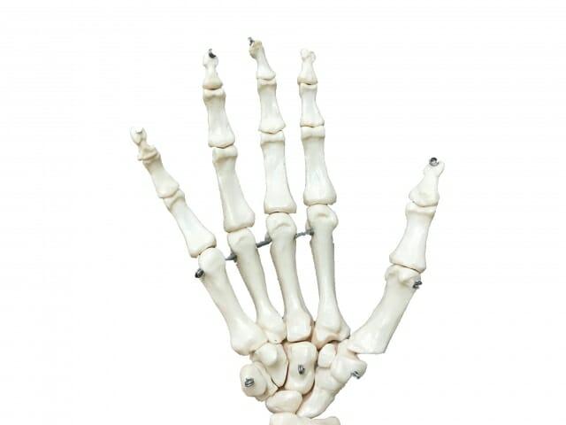 腰痛点の位置(骨)
