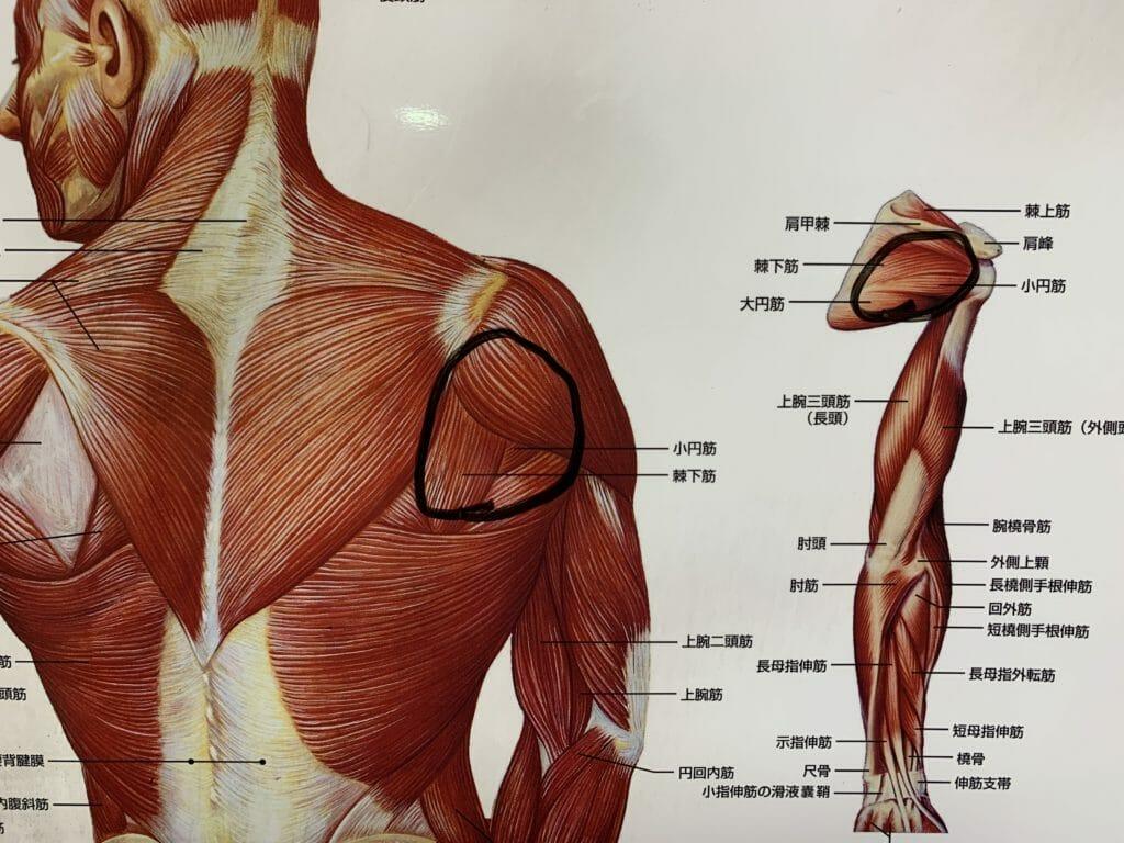 肩甲骨のトリガーポイントをマッサージする