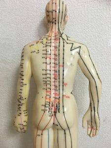鍼灸を使った体性ー自律神経反射による自律神経調整