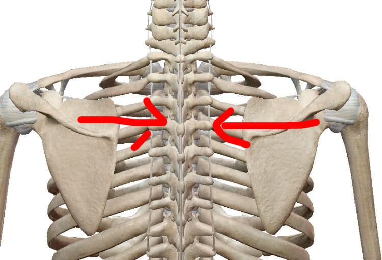 肩甲骨を中心に寄せる筋力が弱いことで起きる肩こり
