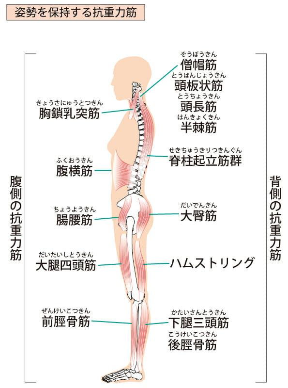 反り腰による子育て腰痛を改善するためのストレッチと筋トレ