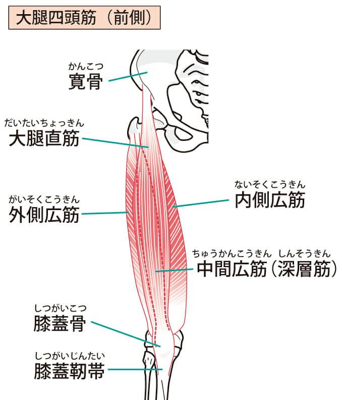 大腿四頭筋のストレッチ
