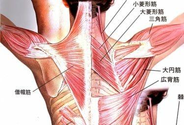 僧帽筋の筋トレをご紹介|ストレッチが効かない肩こり解消法